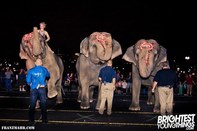 12-03_elephants119-30-Edit-Edit