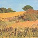 Janet E Davis, Summer at Bank House, Guyzance, 1991, oil on board, 16x20 inches