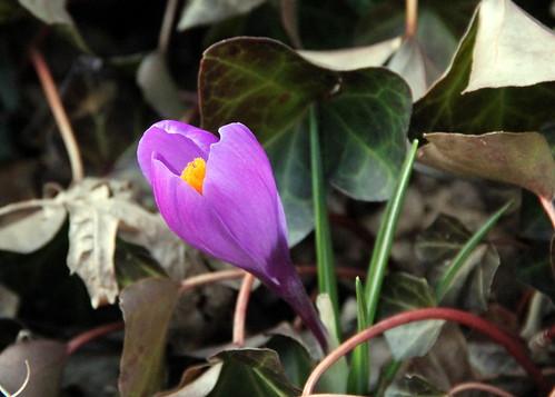 TY #67 flower