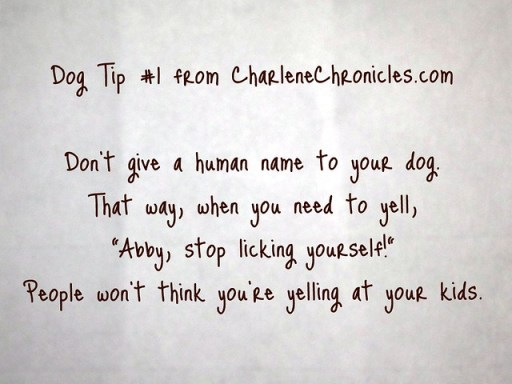 DogTip#1_CharChronicles