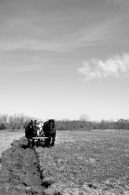 Spring Plowing 1