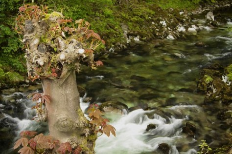 River, Elterwater