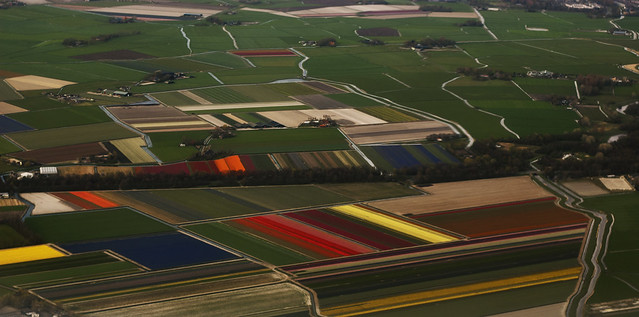 Tulips seen from the sky