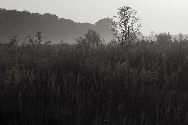Prairie Mist