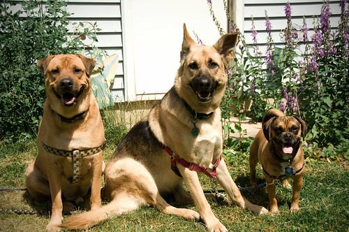 threedogsicc