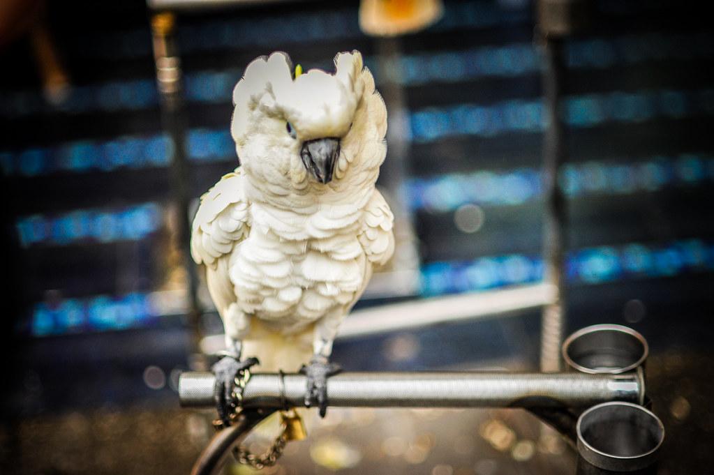 Angry Bird in Cijin