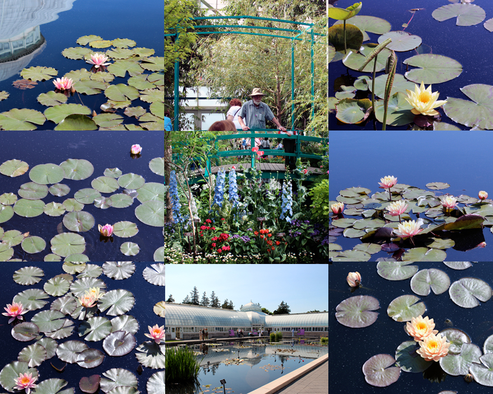 nybg-collage-12