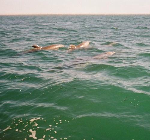 2008.LagunaSanIgnacio.Baja.12