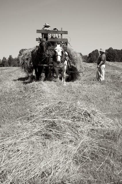 Making Hay 2