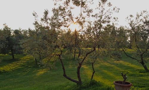 divine olives