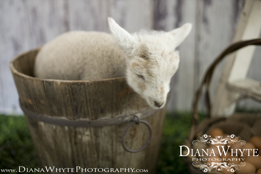Lamby 02