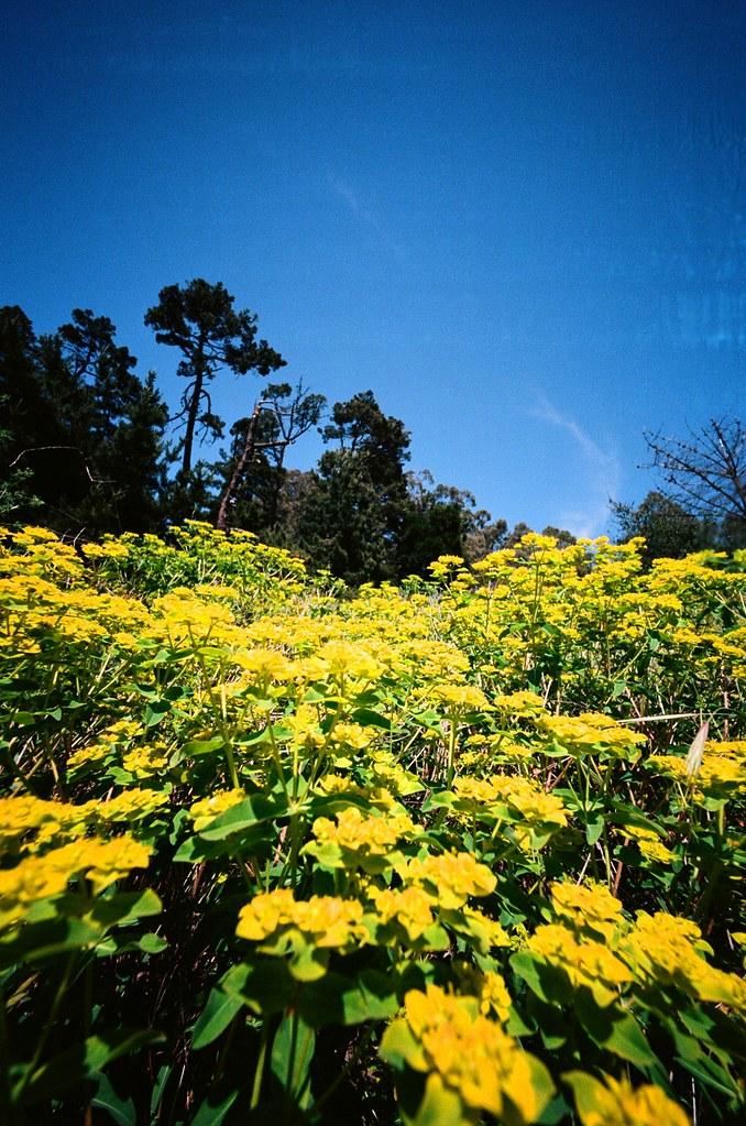 Berkeley Hills Hike