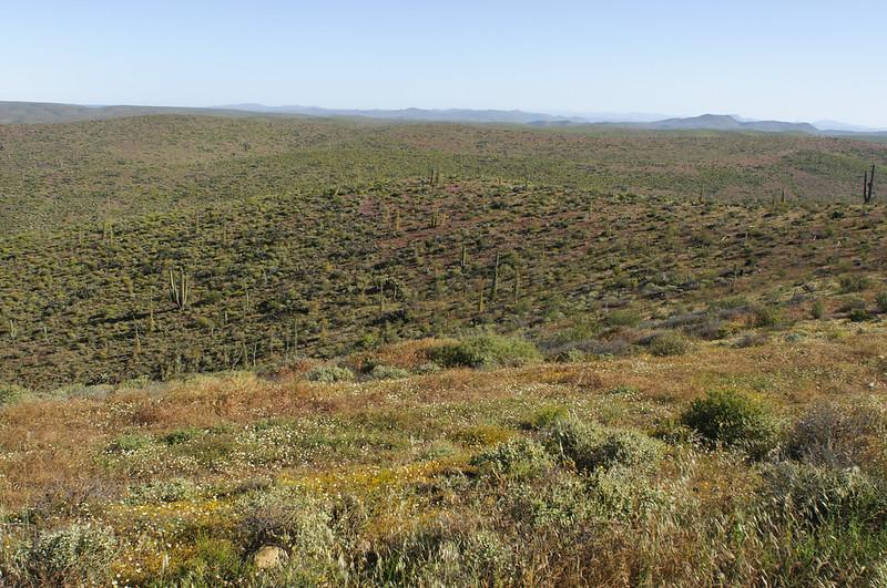 下加利福尼亞半島索諾然荒漠與加利福尼亞硬葉灌叢過渡帶