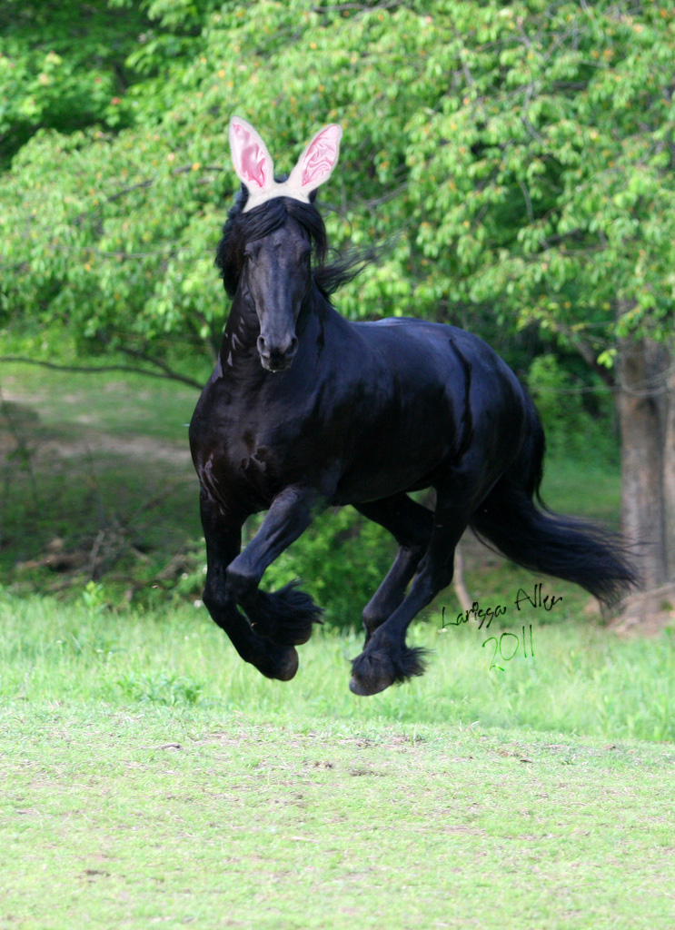 Cute Wallpapers For Easter Happy Easter Love Keegan J Friesian The Easter Friesian