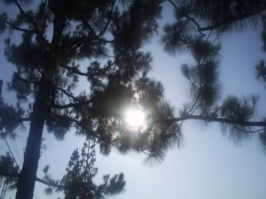 The Sun Shining Through The Branches