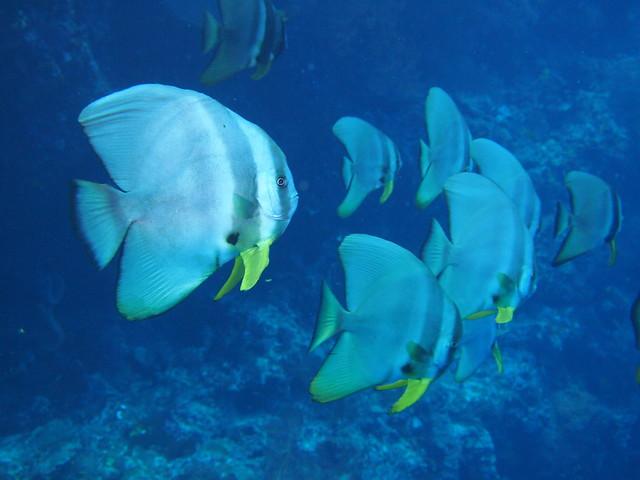 Wakatobi: Pristine Coral (6/6)