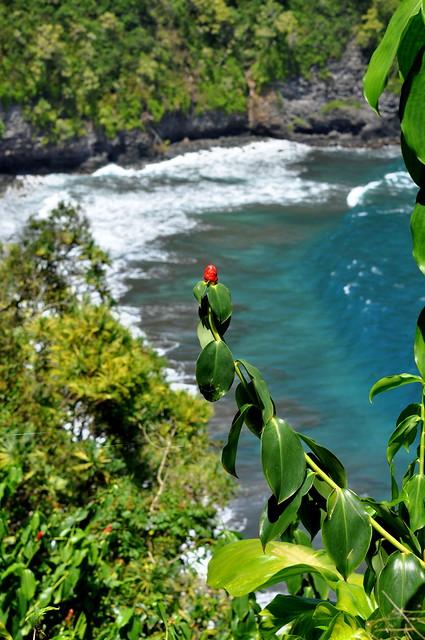 red flower + surf