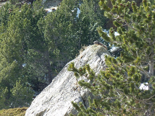 Marmottes Eyne Pyrénées
