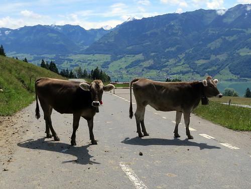 Swiss Toll Road