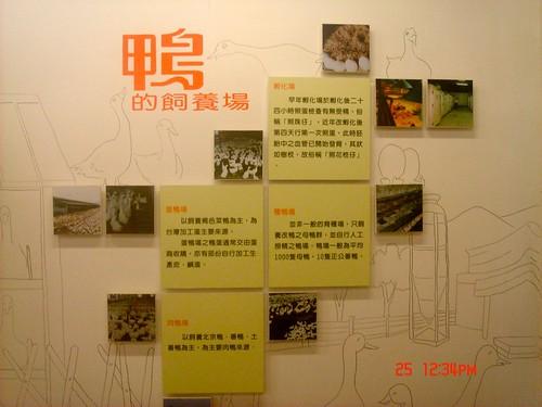 羅東 博士鴨工廠31
