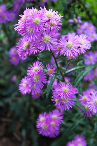 Flowers at Mt. Apo Highland Resort 3