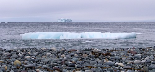 Bergs at Blackhead and Middle Cove