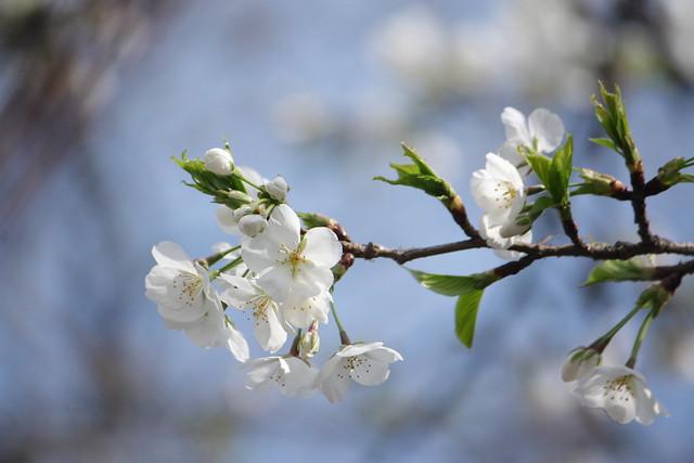 Spring Arrives! (5/6)
