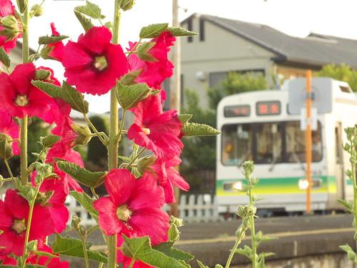 花と7500系