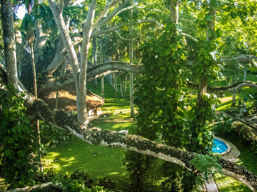 Huge tree seen from our balcony, Mayaland Resort Hotel, Chichen Itza