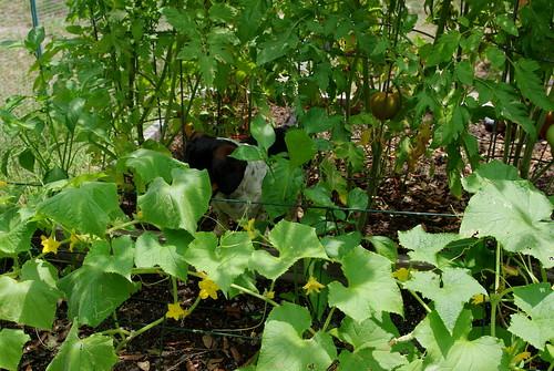 Jack, the garden detective