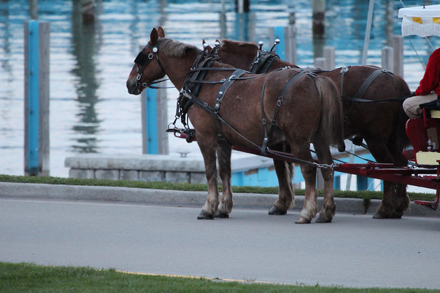 Horses by the harbor