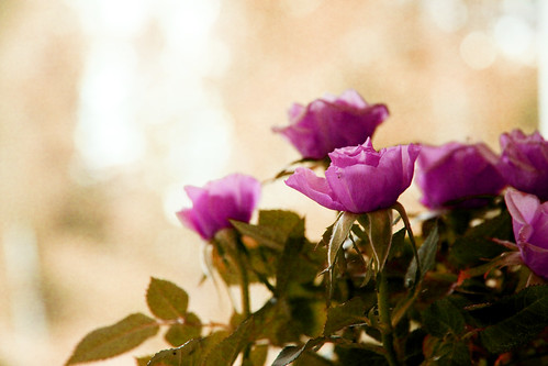Flower by JO_Wass