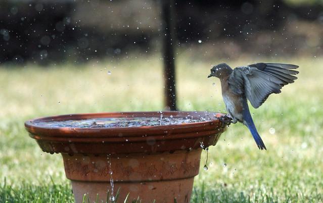 Enjoying the sprinkler
