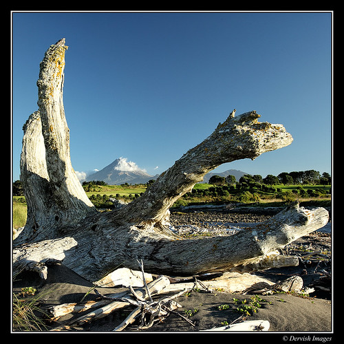 Taranaki Driftwood Series by Dervish Images