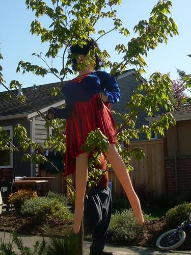 Wonder Woman in tree