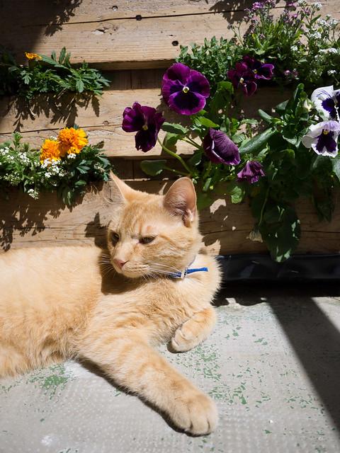 Safran aime mon jardin palette 3