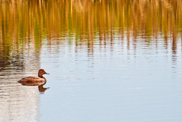 Shooting Ducks.