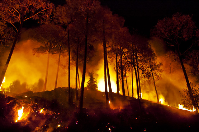 Shimla Hills are Burning - More Forest Fires engulf the Himalayas this summer of 2012 by Anoop Negi Photography India