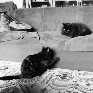 Cats' Sofa Rivalry