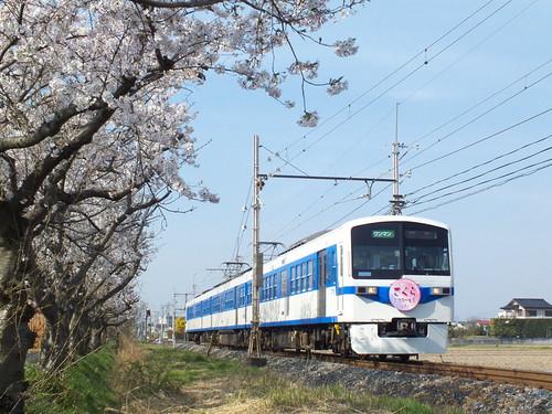 6003F(さくらHM) @武州荒木〜東行田