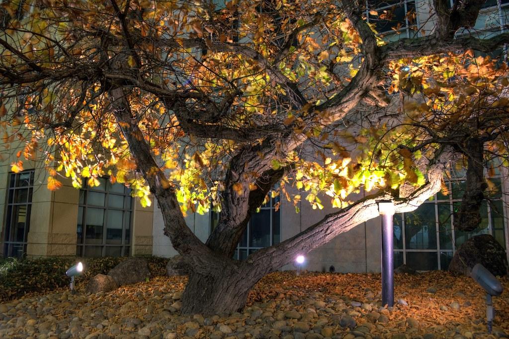 Broad Tree