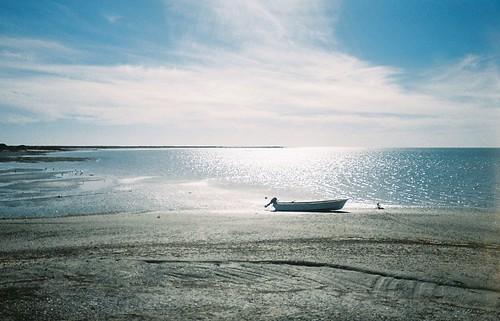 2008.LagunaSanIgnacio.Baja.2