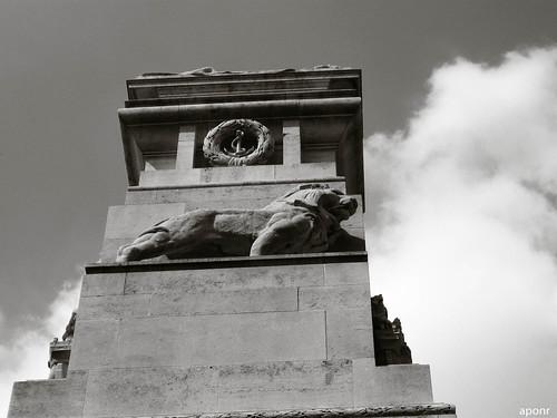 Lion - Southampton
