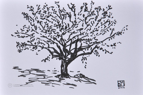 Brush pen sketch of a tree at Birch Run. by photographerpainterprintmaker