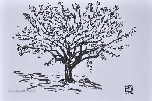Brush pen sketch of a tree at Birch Run. by photographerpainterprintmaker