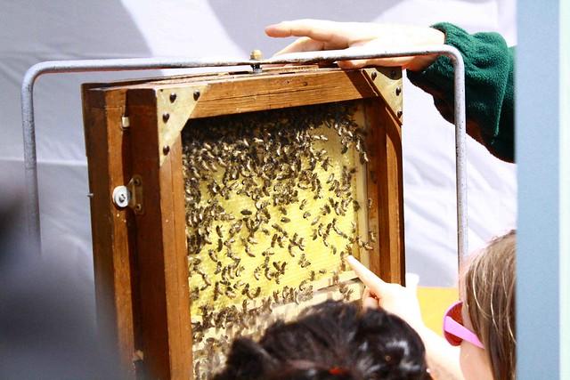 Bees, chili fiesta
