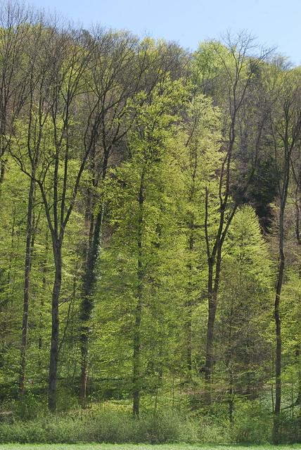 April's Green 2012