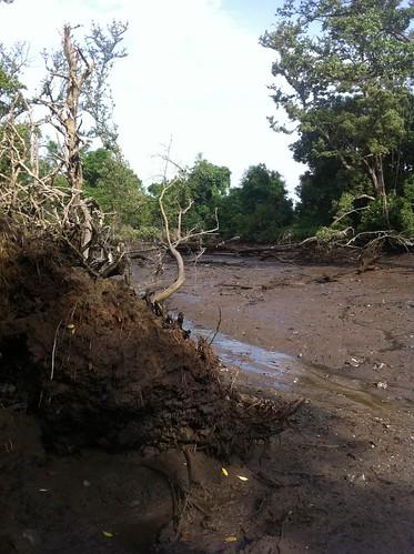 048mandai_mangrove_recce-24may2012