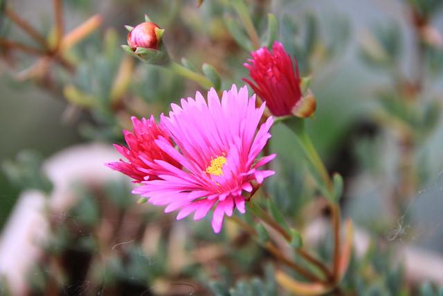 Flores #Photography  #Foto 9