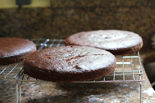 chocolate cakes, cooling